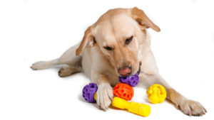 k9 connectables dog toys